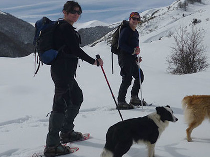 snowshoeing dogs