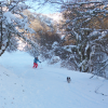 Skiing in the woods with Tilly -