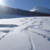 Ski tracks in the sun -