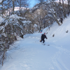 Skiing a track in the woods -