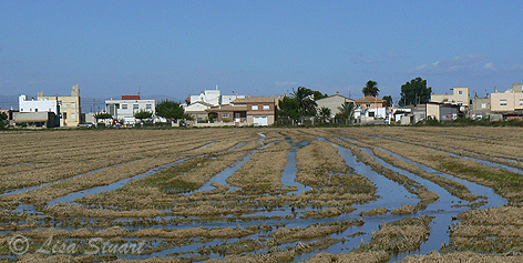 Village on the Ebro delta