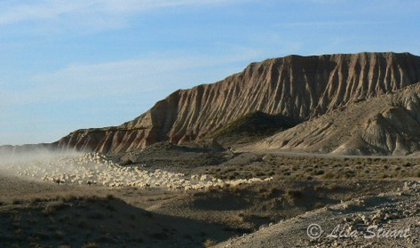 Flock of sheep in Las Bardenas