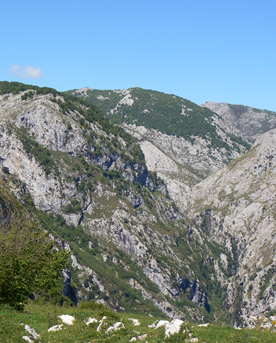 Wolf territory in the eastern massif of the Picos