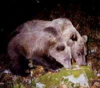 female-bear-and-cub-fapas